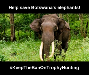 Copy of Save botswanas elephants